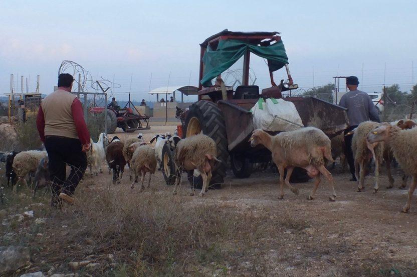 """Akkaba, nördlich von Tulkarem: Bauern nutzen ein sogenanntes """"landwirtschaftliches Tor"""". Da die Route der Trennbarriere durch besetztes Gebiet verläuft, leben die Bauern heute östlich der Sperranlage, ein Teil ihres Landes liegt westlich davon. Zu festen Zeiten, jeweils 2-3-mal täglich, können sie die Trennbarriere überqueren, sofern sie im Besitz eines Passierscheins sind."""