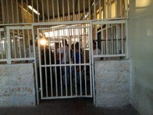 Bethlehem Checkpoint 300 passieren jeden Morgen etwa 6000 Menschen ©EAPPI