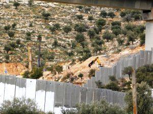 Olivenbäume werden gefällt und Land geebnet, Vorbereitungen für den Straßenbau auf der anderen Seite der Mauer; Foto © EAPPI