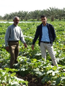 Auf dem Zucchinifeld von Bauer Hassan. Auch er hat Dattelpalmen gepflanzt, die einen höheren Ertrag bringen.