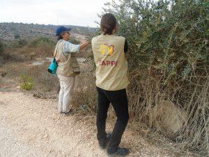 EAs bei der Olivenernte in Haris, © EAPPI