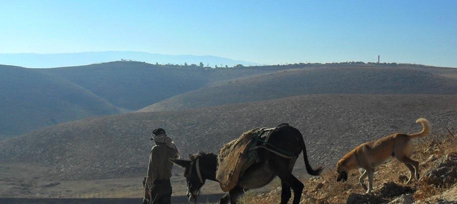 Burhan mit Esel und Hütehund, auf dem Hügel im Hintergrund die Siedlung Chemdat; Foto © EAPPI