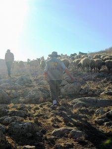 Aufstieg mit der Herde; Foto © EAPPI