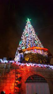Weihnachtsbaum in Jerusalem