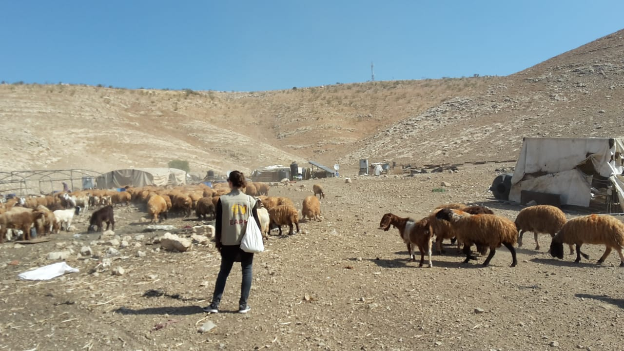EA beobachtet das Aufbauen der Zelte in Khirbet Samra; Foto © EAPPI