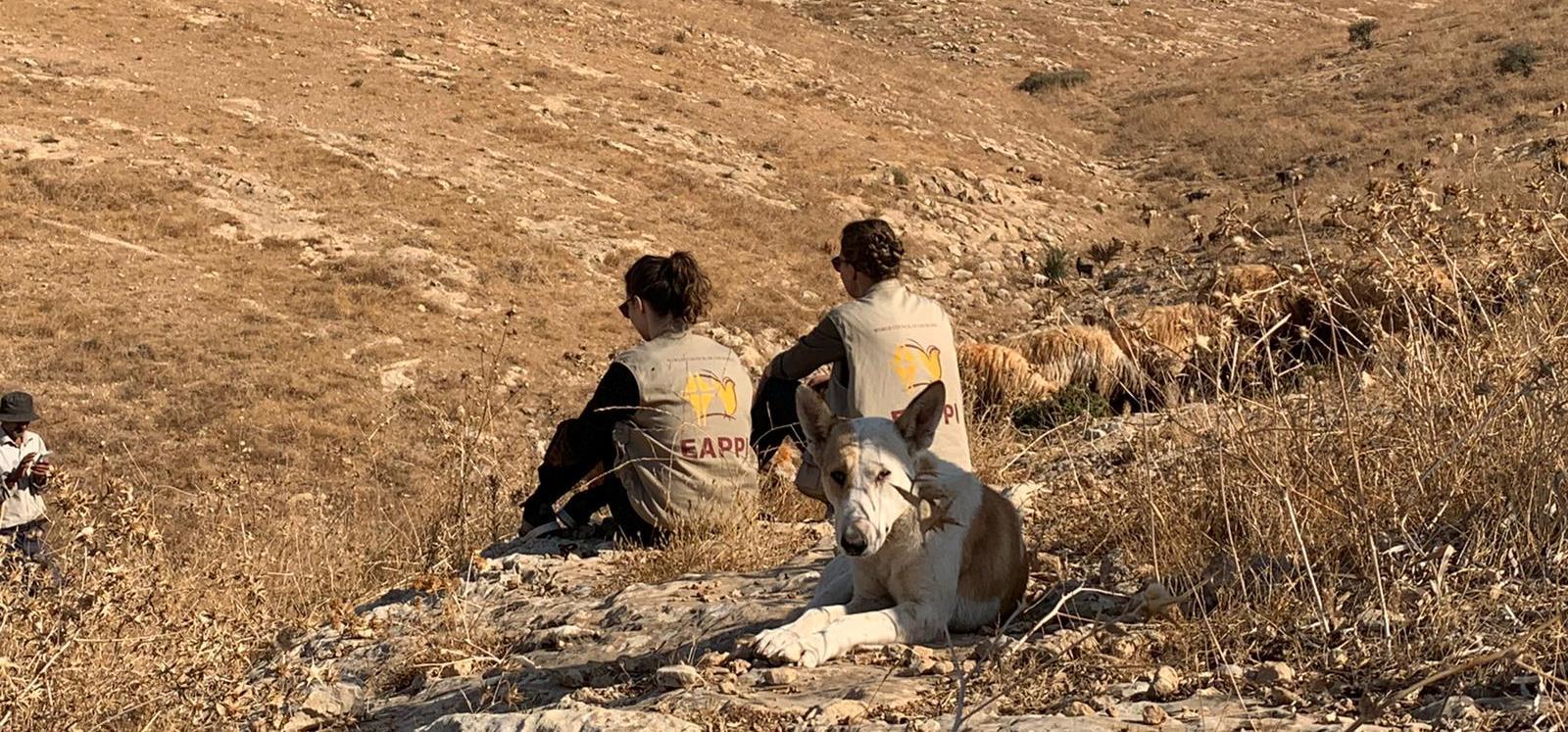 EAs begleiten einen Schäfer und seine Herde im Jordantal; Foto © EAPPI