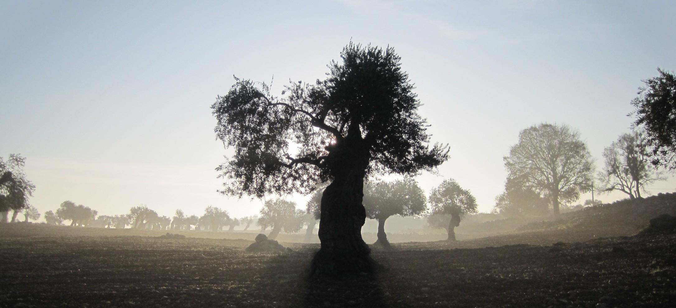 In der Umgebung von Yanoun, Foto: Kerstin Dahlberg