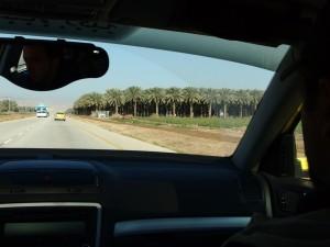 Dattelplantagen enlang der Route 90