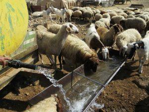 Land- und Viehwirtschaft unter erschwerten Bedingungen: Aufgrund des israelischen Restriktionen hinsichtlich des Zugangs zu Wasser müssen die palästinensischen Bauern im Jordantal Wasser zu stark erhöhten Preisen über Tankwagen beziehen; Foto © EAPPI (Cassie)