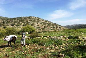 Wadi Qana, die Häuserkette auf dem Bergkamm im Hintergrund des Bildes gehört zu einer israelischen Siedlung ©EAPPI