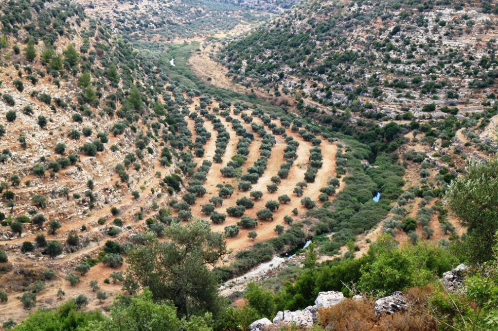 Schwarzes Abwasser fließt durch das Tal, daneben landwirtschaftlich genutzte Fläche ©EAPPI