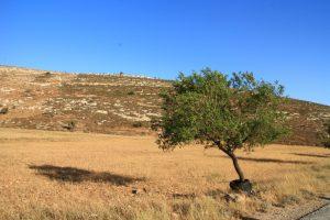 Felder und Hügel in Yanoun; © EAPPI