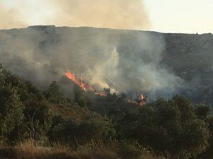 Brennende Olivenbäume in Burin, auf dem Hügel ein Teil der Siedlung; © EAPPI